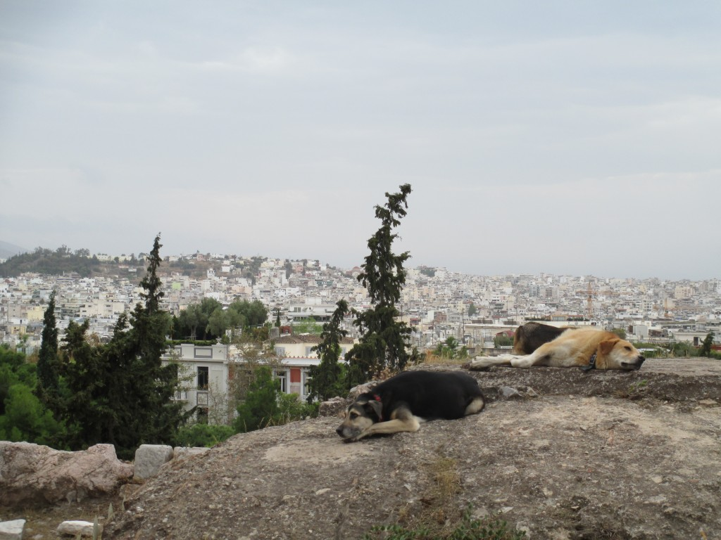 Athens dogs